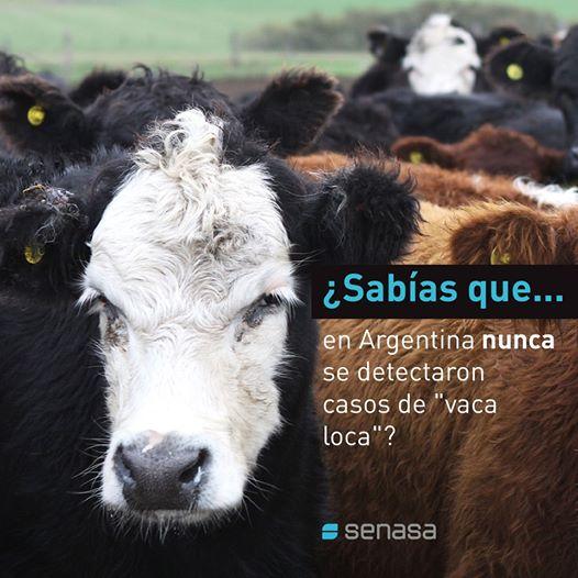 SENASA afirma que no hay Vaca Loca en Argentina