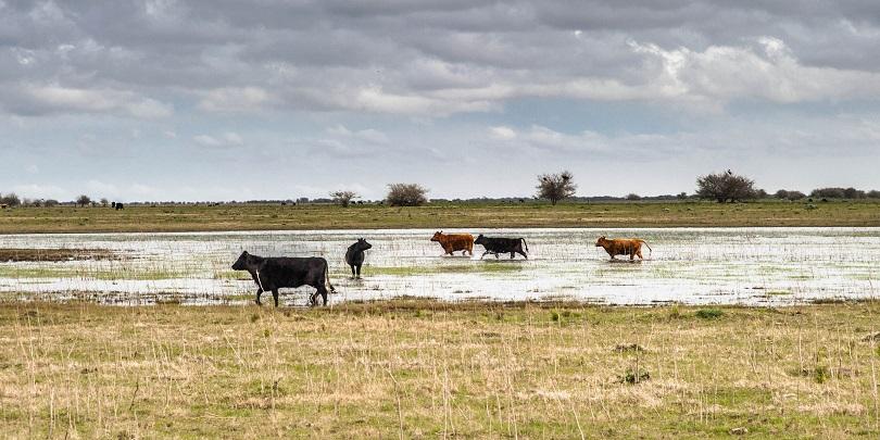 Medidas sanitarias preventivas a tener en cuenta luego de las intensas lluvias
